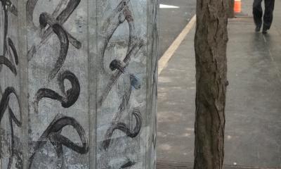 Metal street pole with graffiti mimics neighboring tree trunk and bark